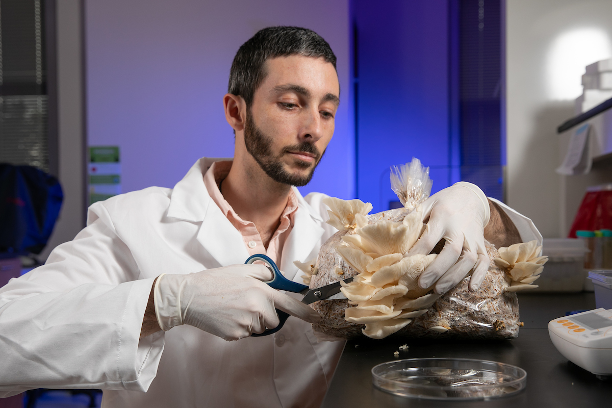Research Scientist Kyle Gabriel removes the fruiting body of the Oyster mushrooms on a bag of wheat straw and cotton seed hulls in the BioInnovation Lab